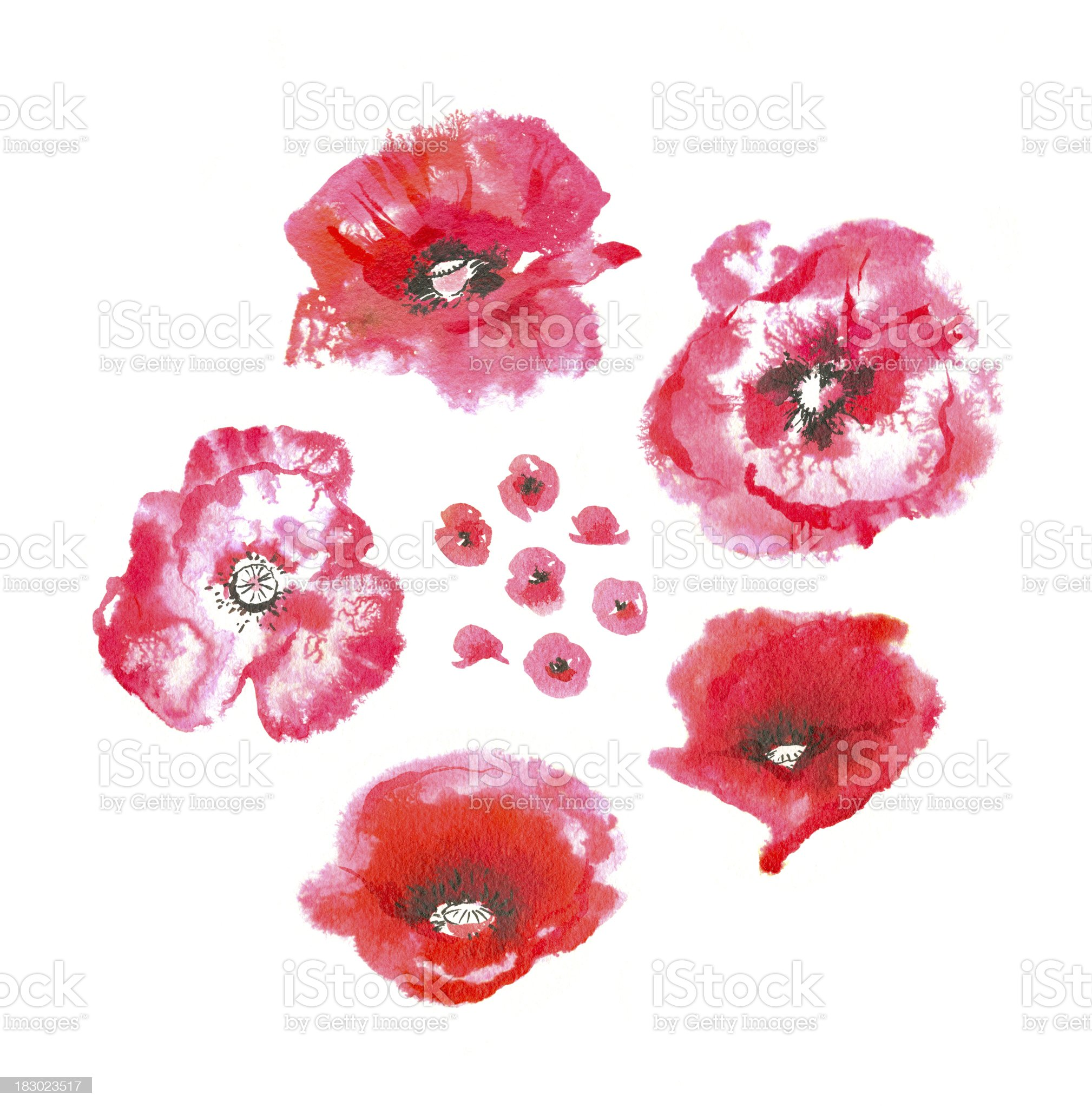 Watercolor Poppies royalty-free stock vector art