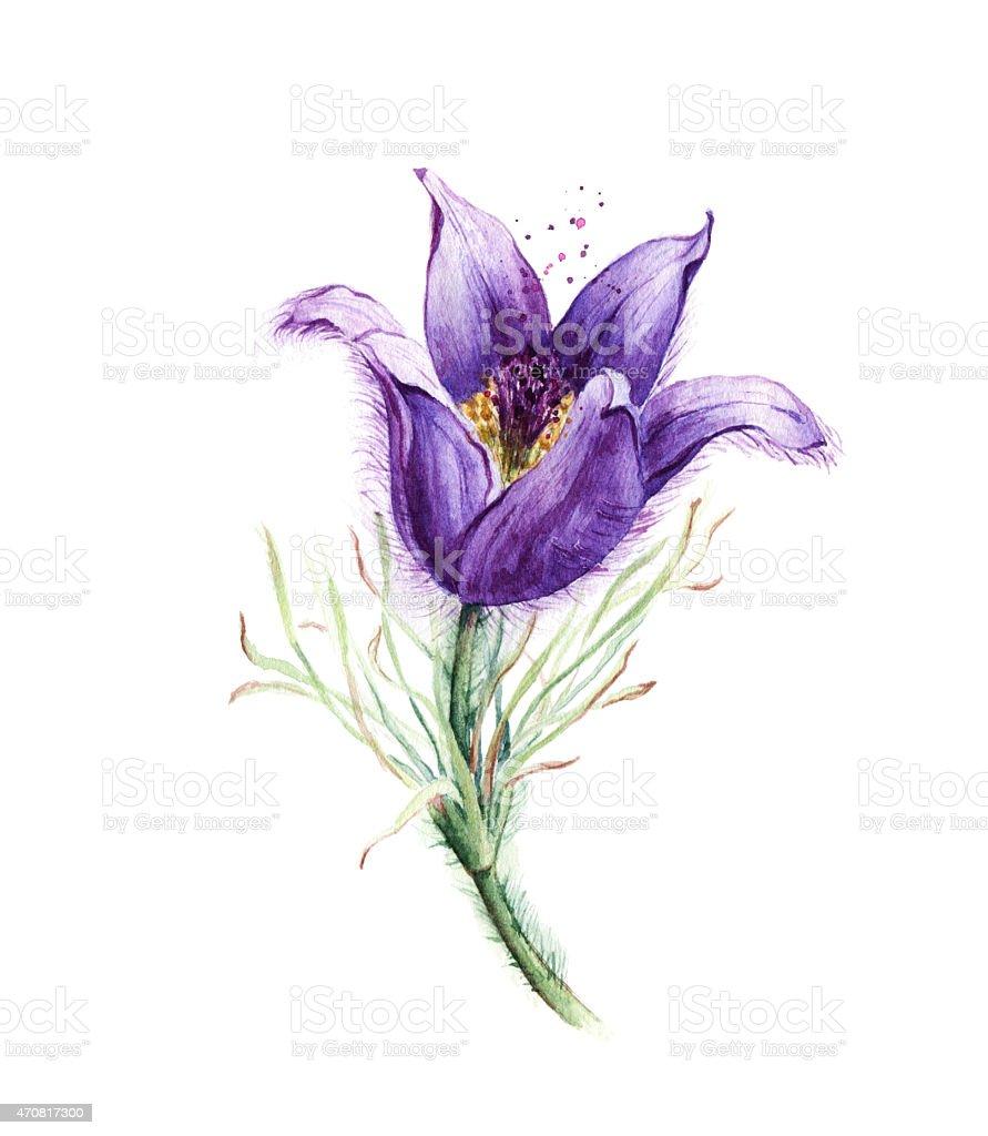 Watercolor purple flower vector art illustration