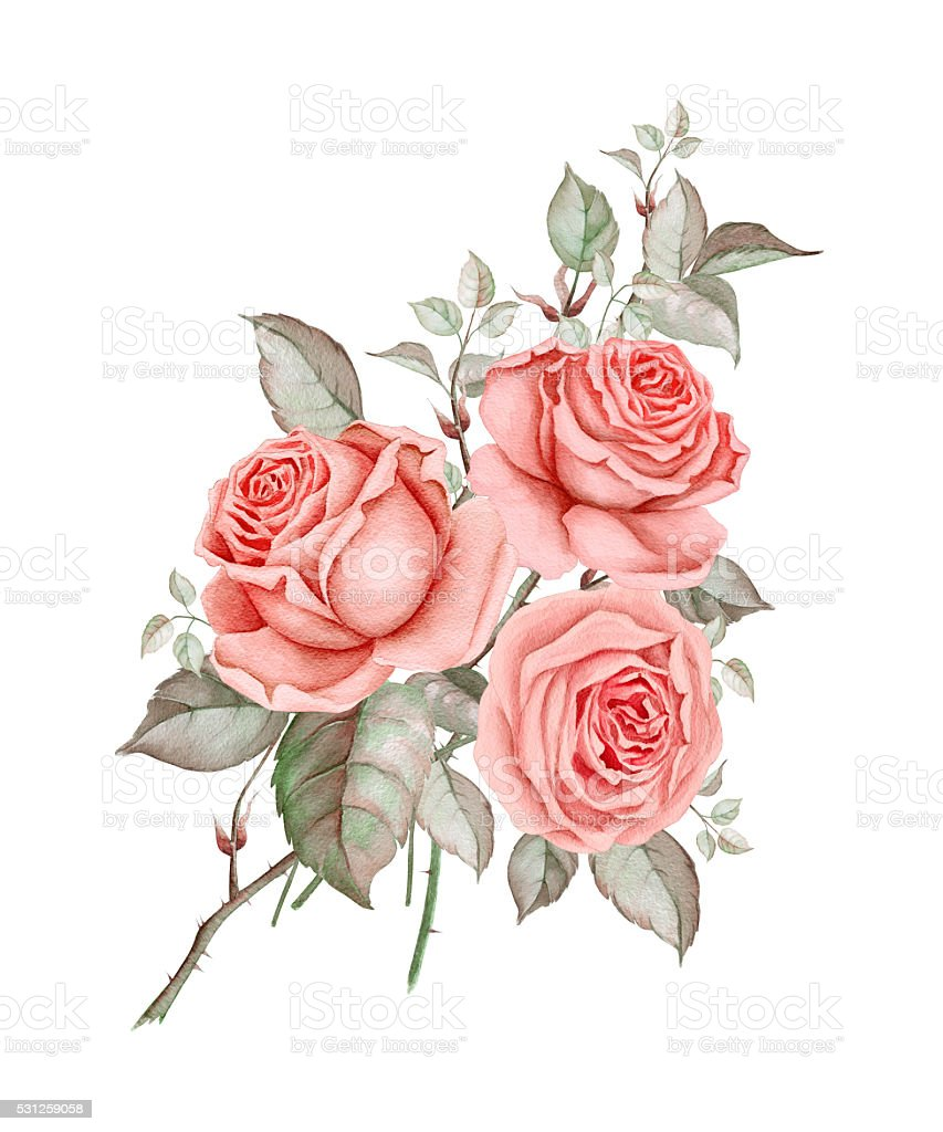 Watercolor red roses vector art illustration