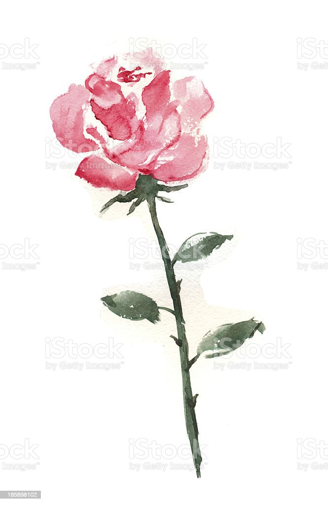 Watercolor rose flower vector art illustration