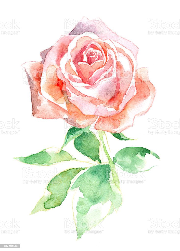 Watercolor Rose royalty-free stock vector art