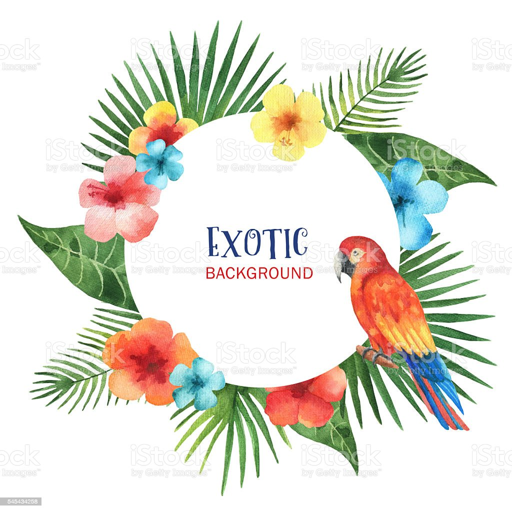 Watercolor round frame from exotic leaves, parrots, hibiscus flowers. stock photo