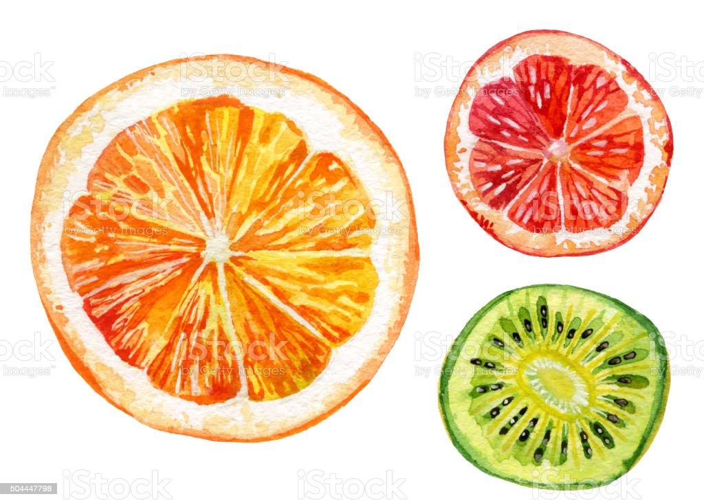 Watercolor set of fresh orange, kiwi and grapefruit vector art illustration