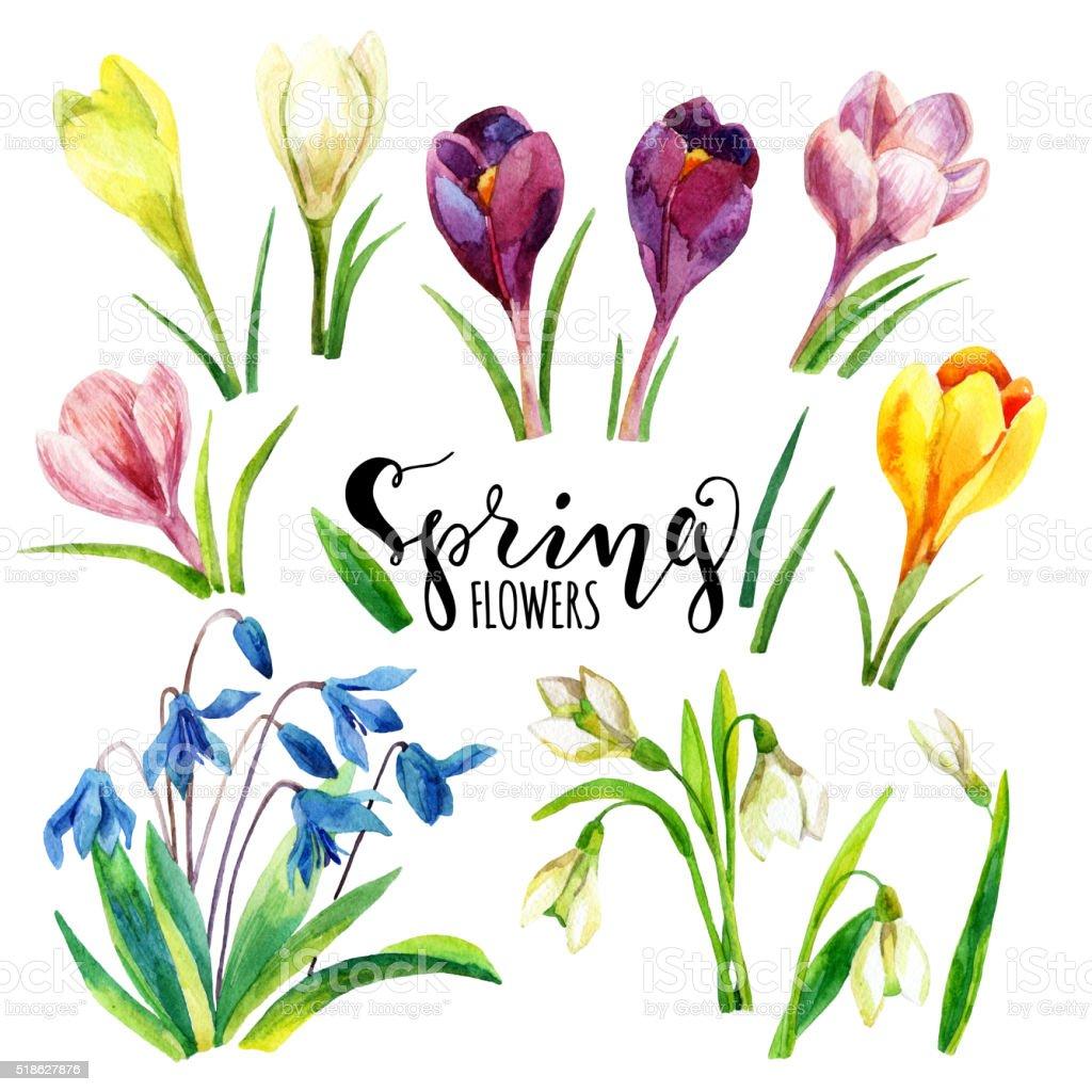 Watercolor spring flowers set. Watercolor flowers. vector art illustration