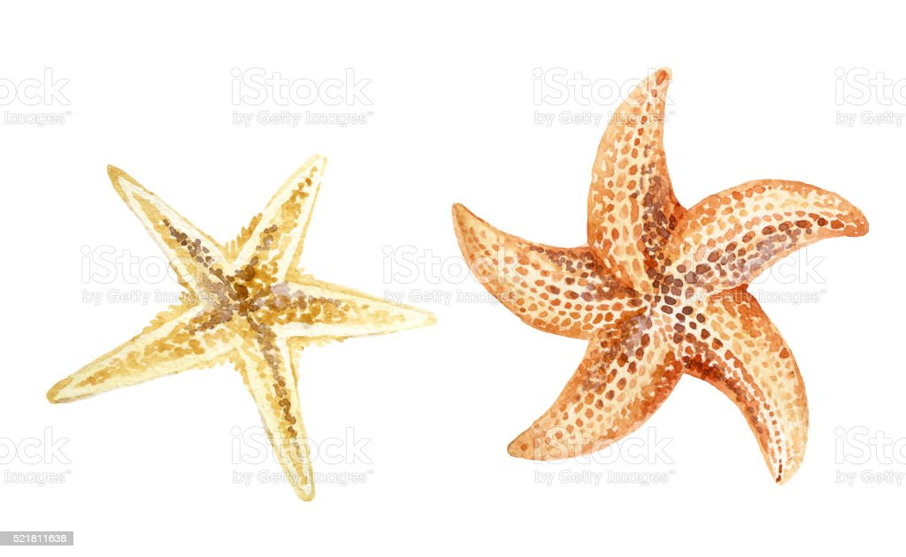 Watercolor starfishes isolated on white background. vector art illustration