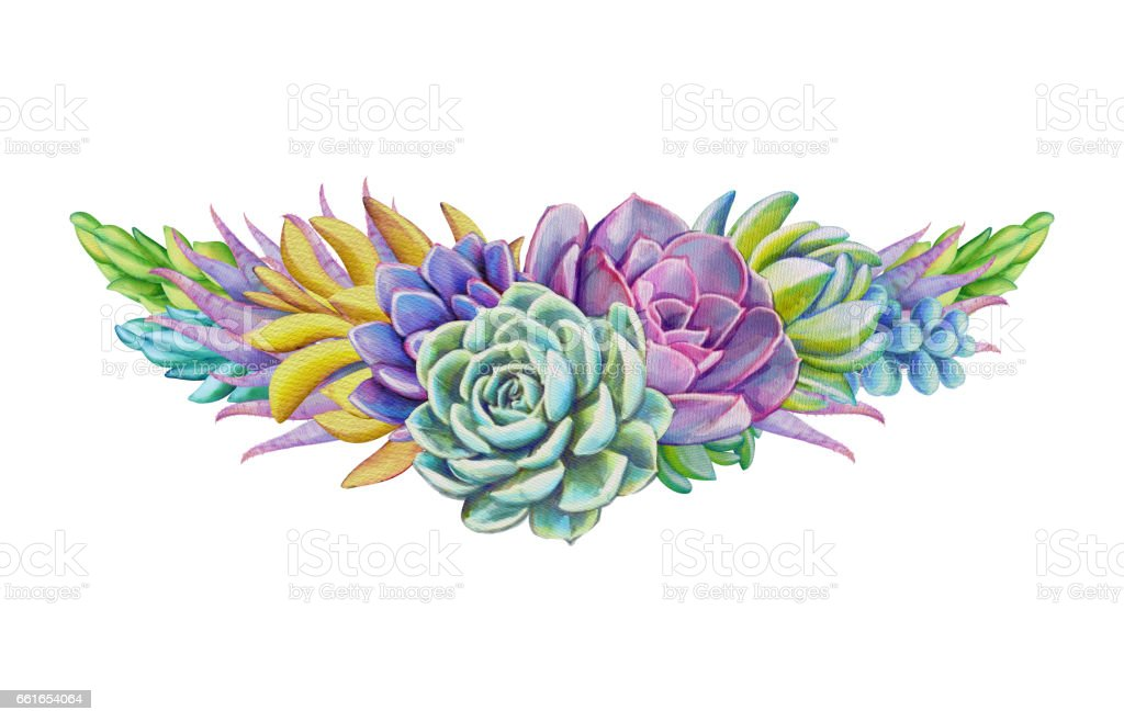watercolor succulents, decorative illustration, floral clip art isolated on white background vector art illustration