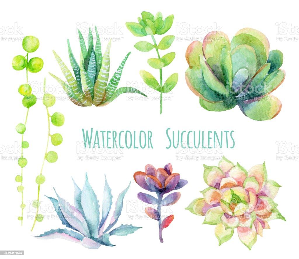 Watercolor succulents. vector art illustration