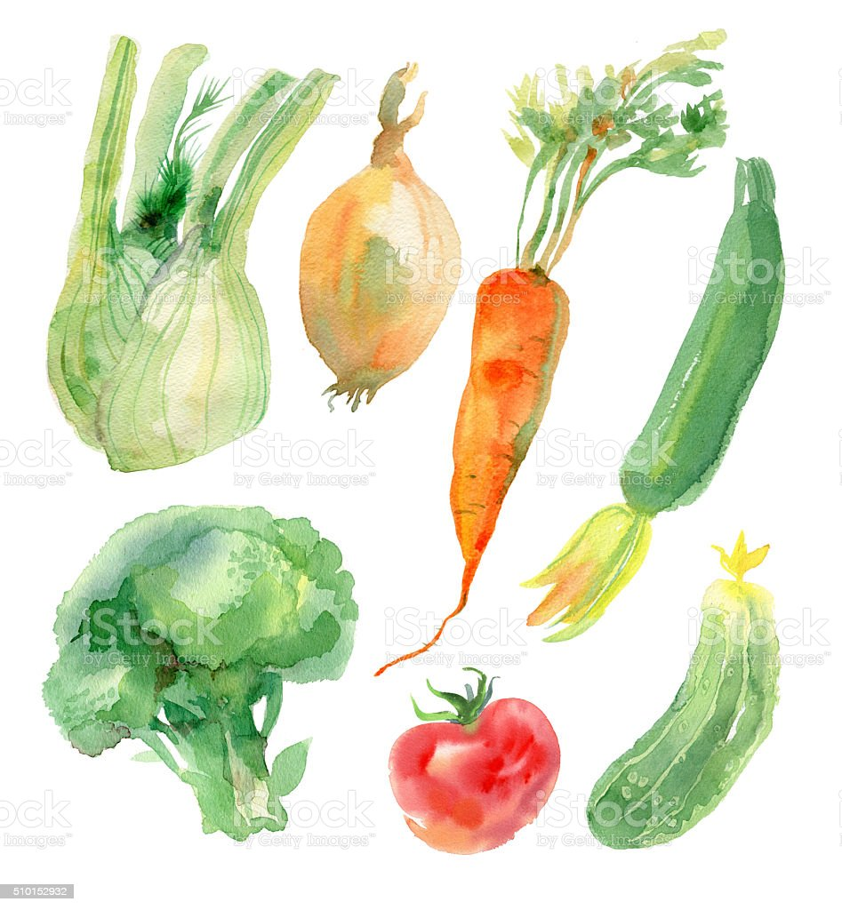Watercolor vegetables set vector art illustration