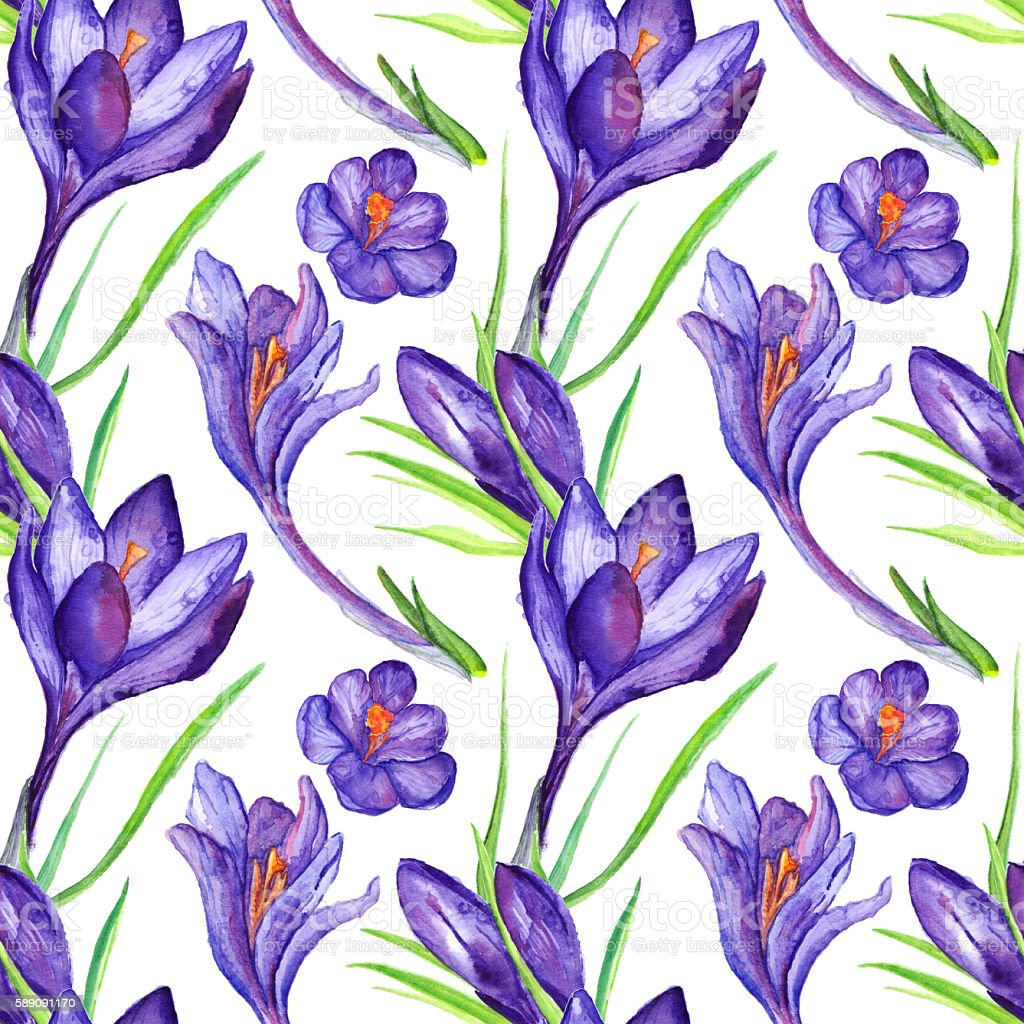 Watercolor violet purple crocus flower seamless pattern background vector art illustration