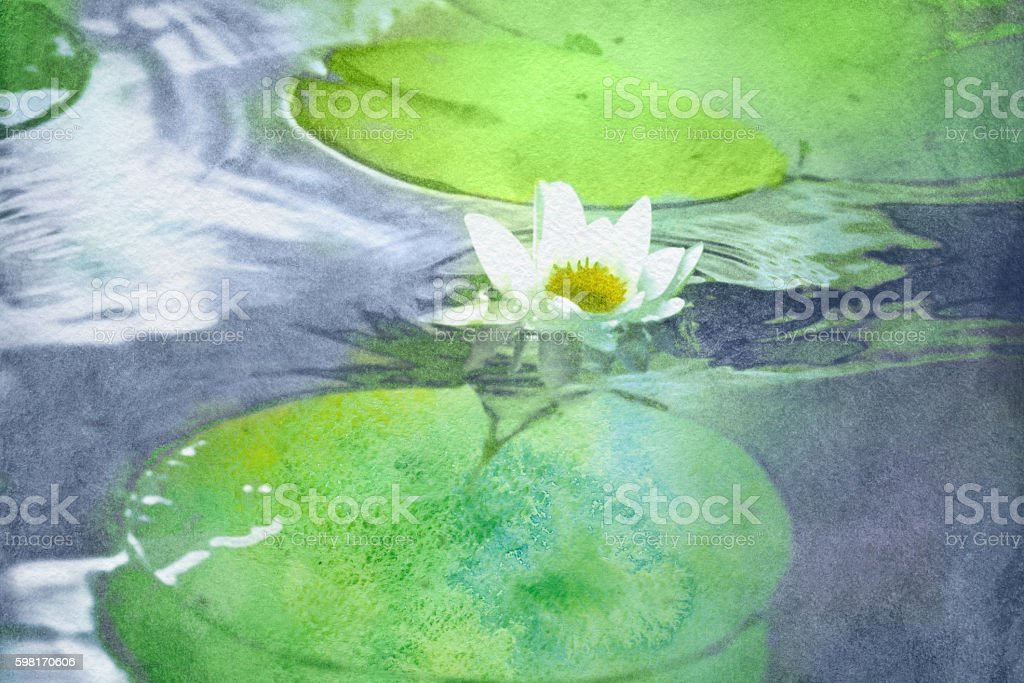watercolor white water lily vector art illustration