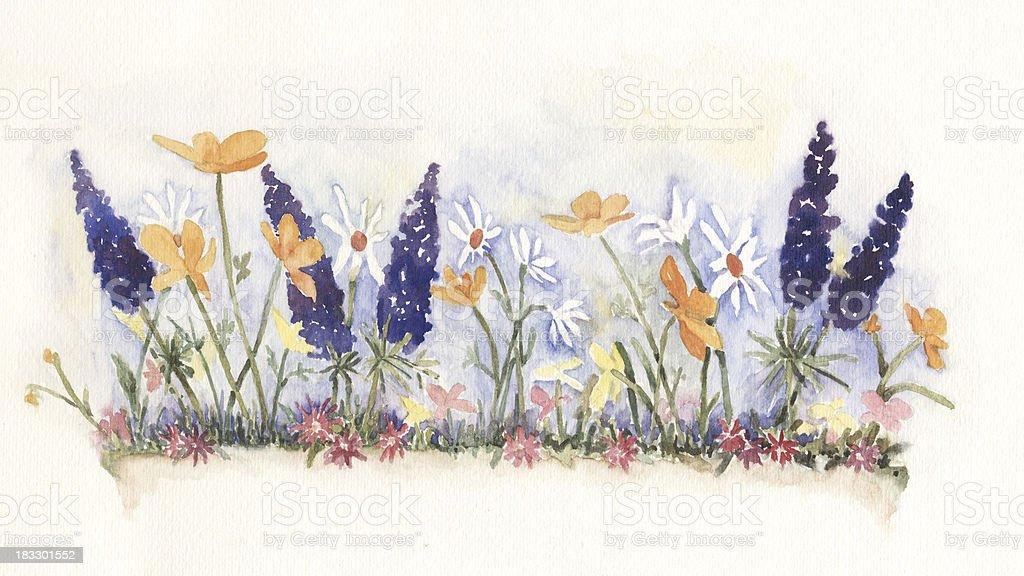 Watercolor Wildflowers royalty-free stock vector art