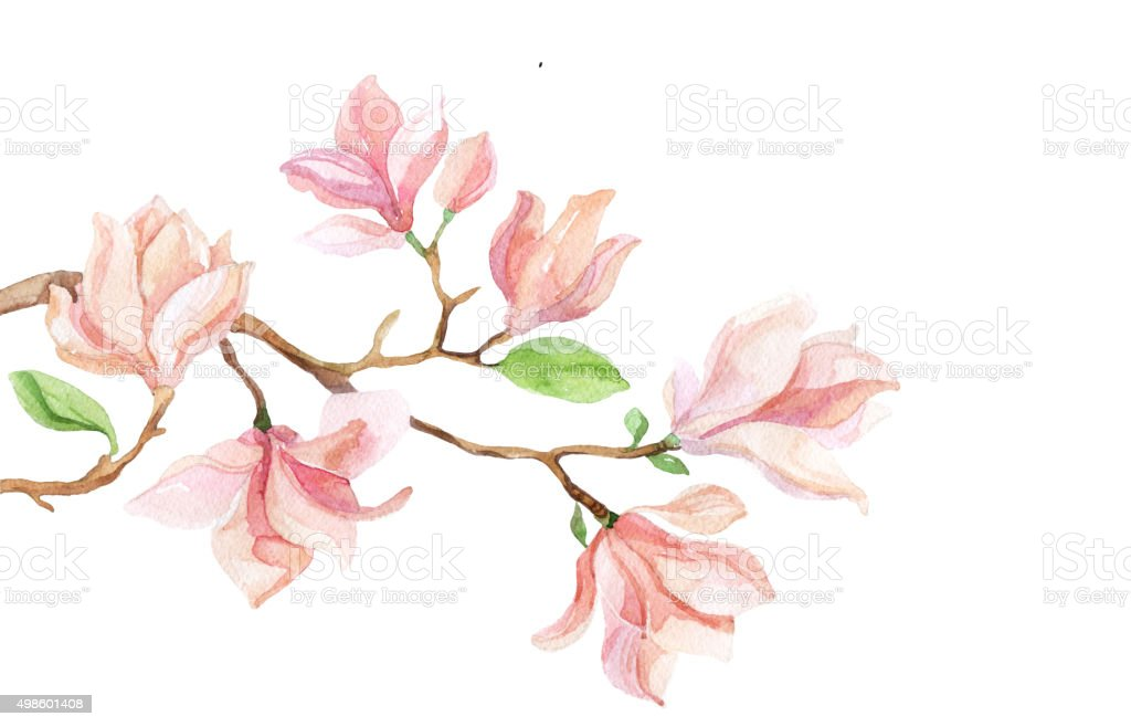 Watercolor with Magnolia flower vector art illustration