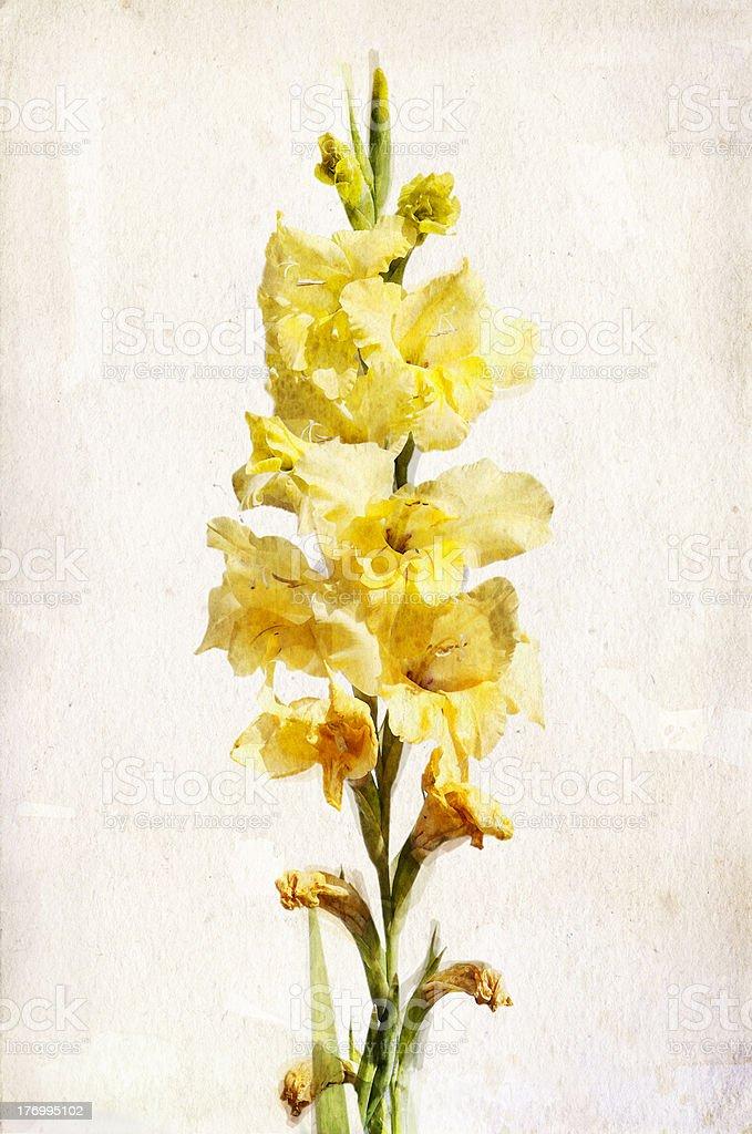 Watercolor yellow gladiolus vector art illustration