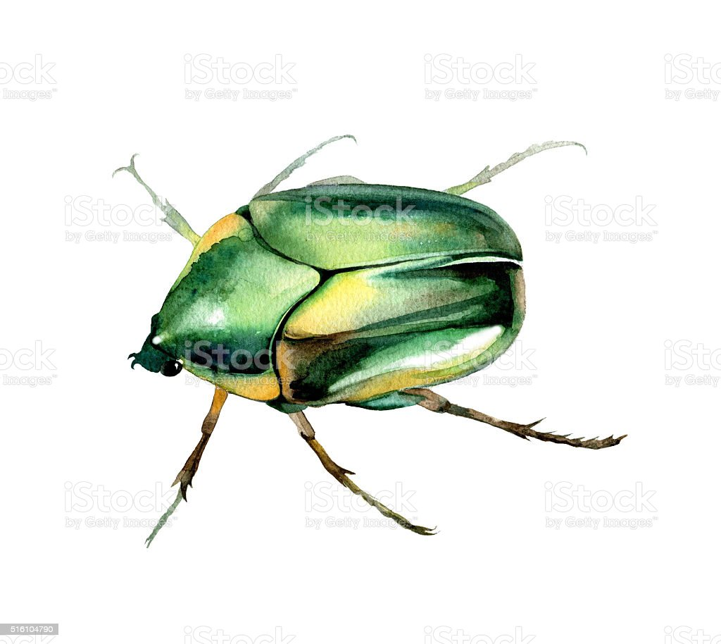 Watercorolor hand-drawn green  maybug. Insect watercolor sketch. stock photo
