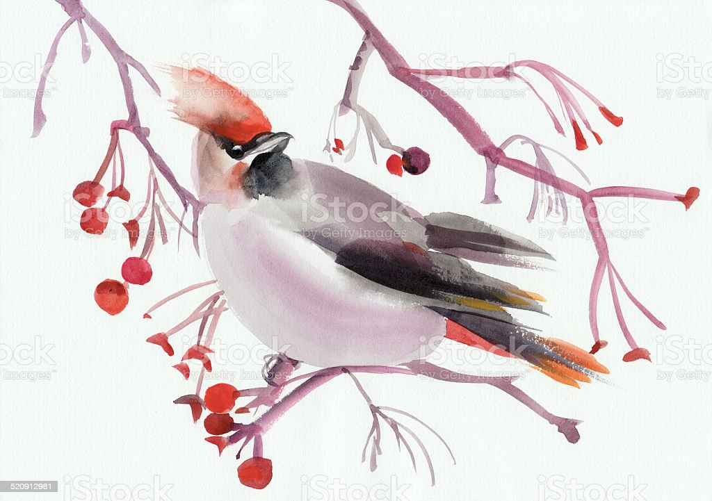 Waxwing on a branch vector art illustration