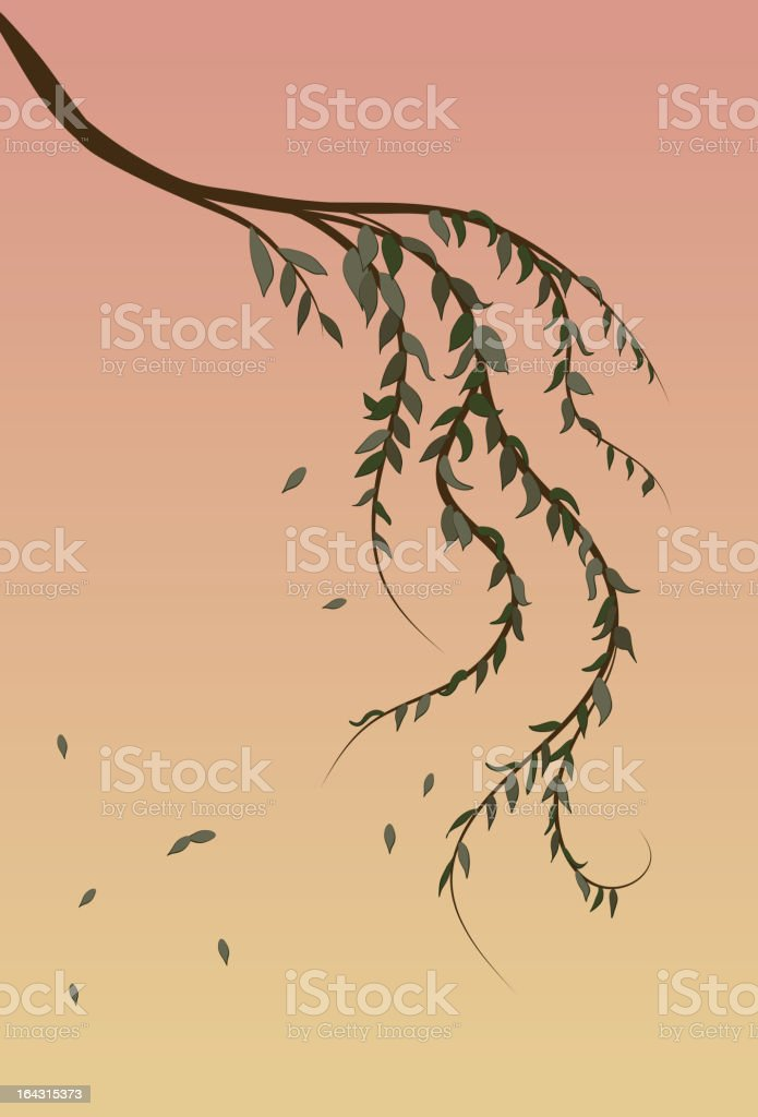 Weeping Willow tree branch background vector art illustration