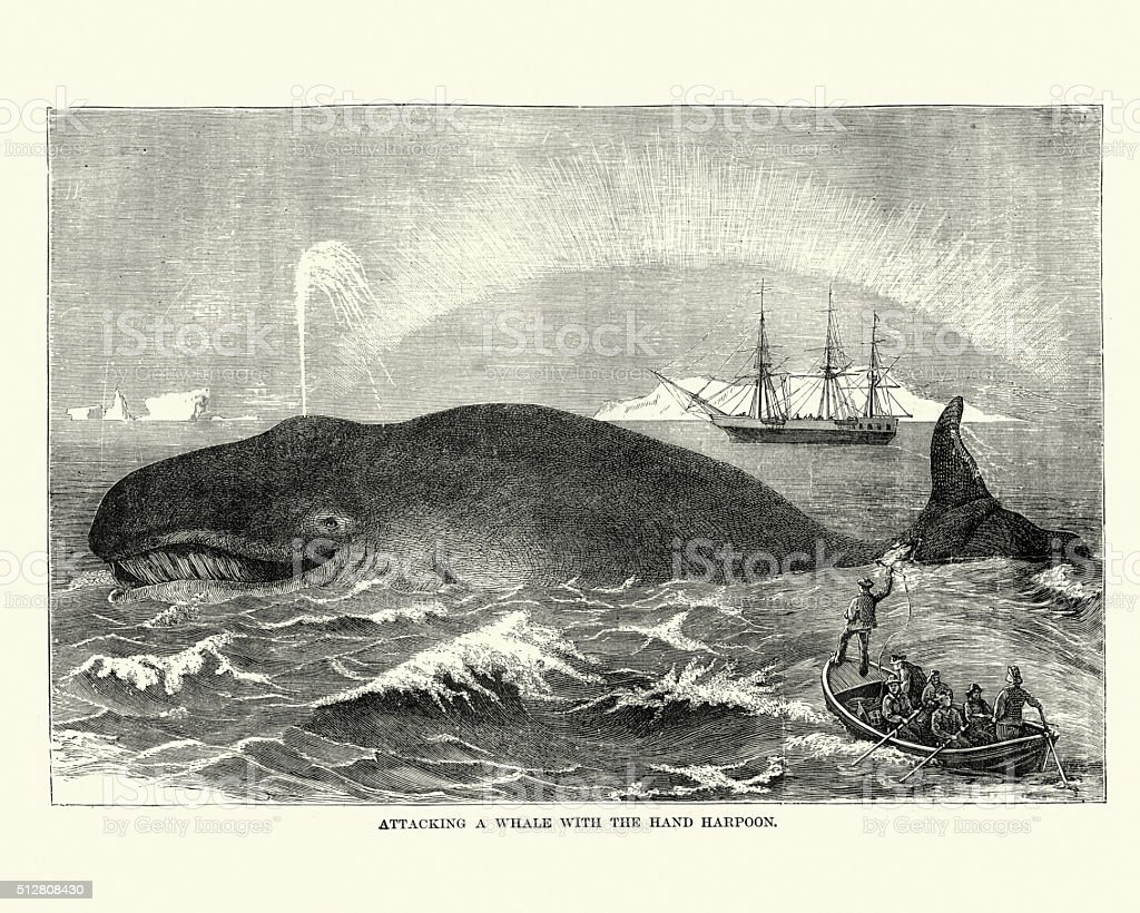 Whalers attacking a whale with a harpoon, 19th Century vector art illustration