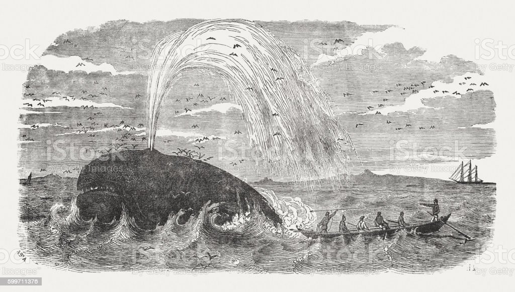 Whalers in action, wood engraving, published in 1855 vector art illustration