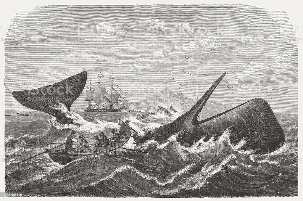 Whalers in action, wood engraving, published in 1869 vector art illustration