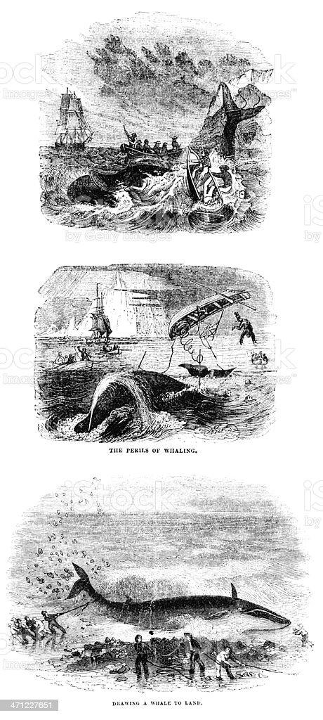 Whaling - 19th century illustrations vector art illustration