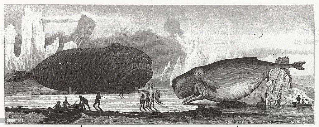 Whaling Engraving vector art illustration