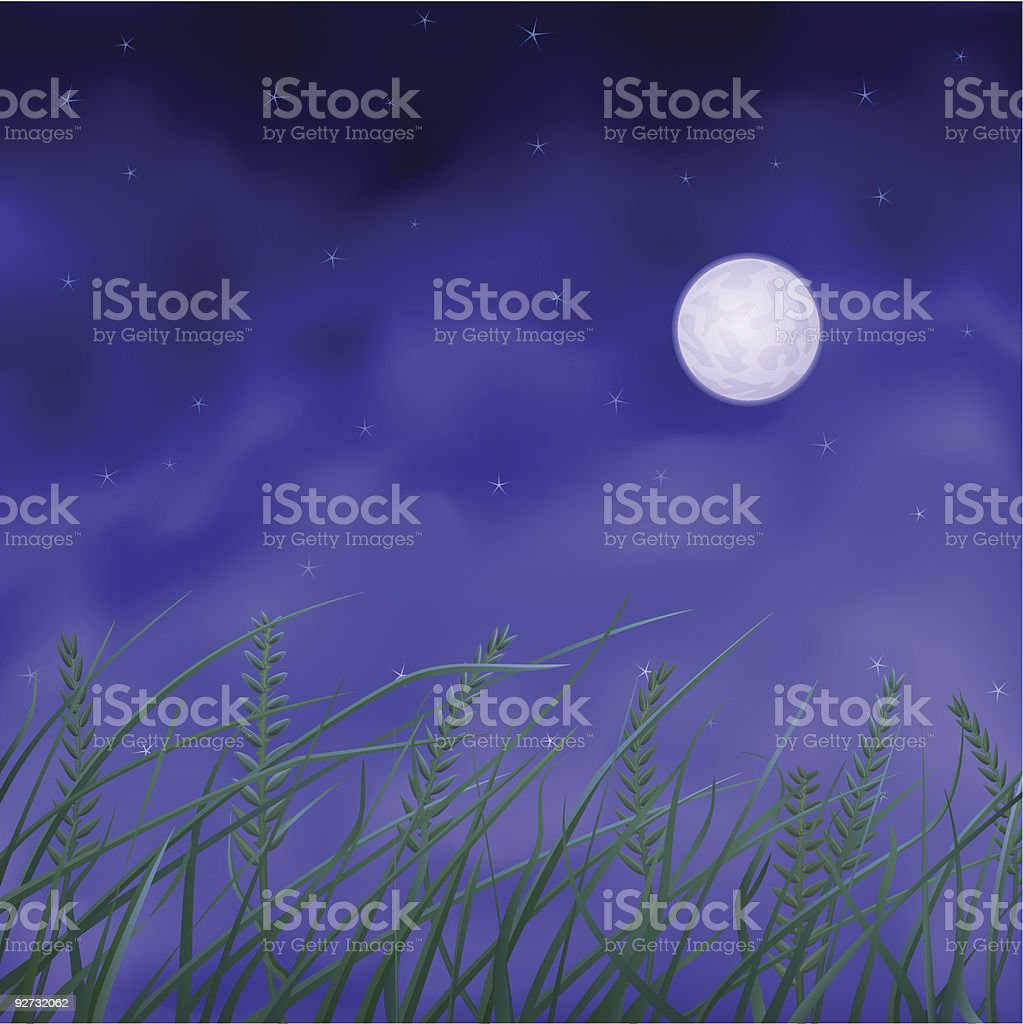 Wheat field at night vector art illustration