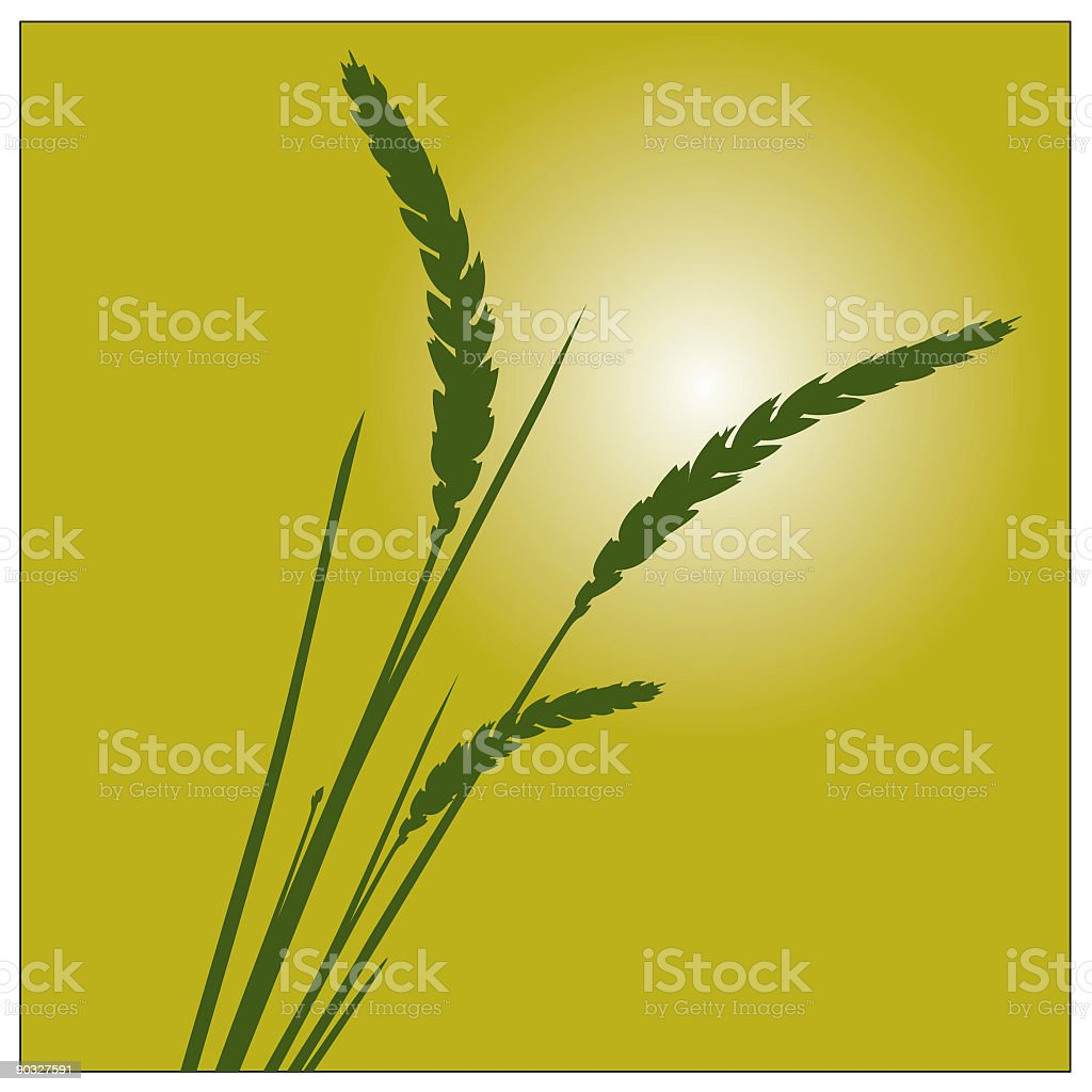 Wheat Grass Plant Illustration 2 royalty-free stock vector art
