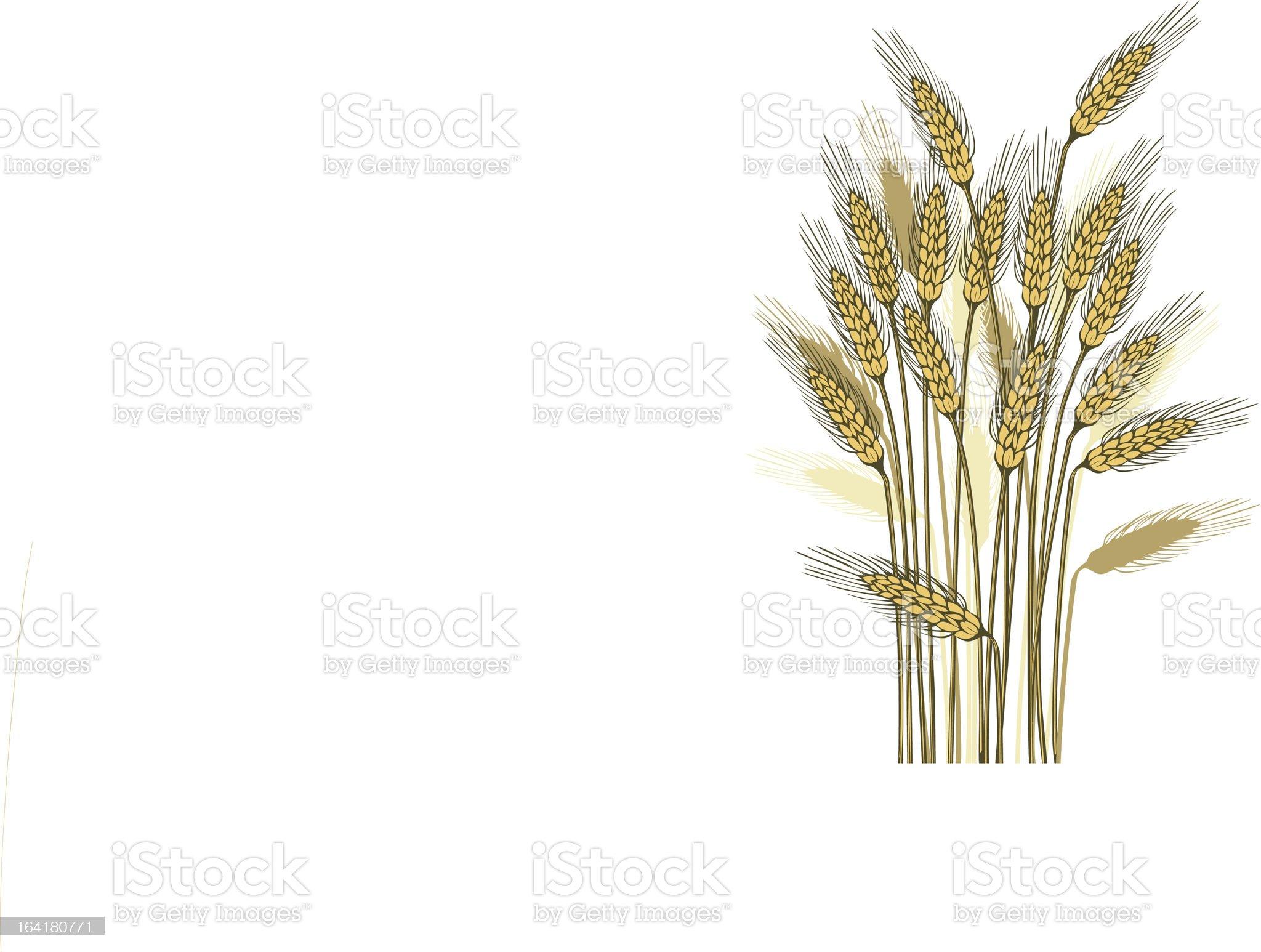 Wheat harvest royalty-free stock vector art