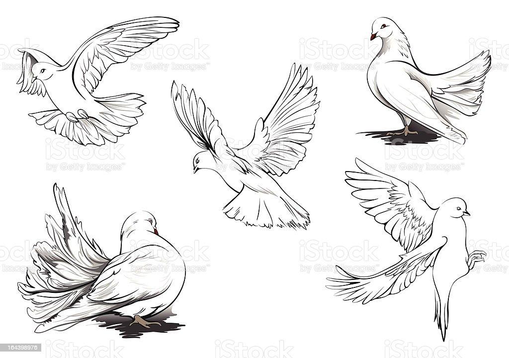 White pigeons vector art illustration