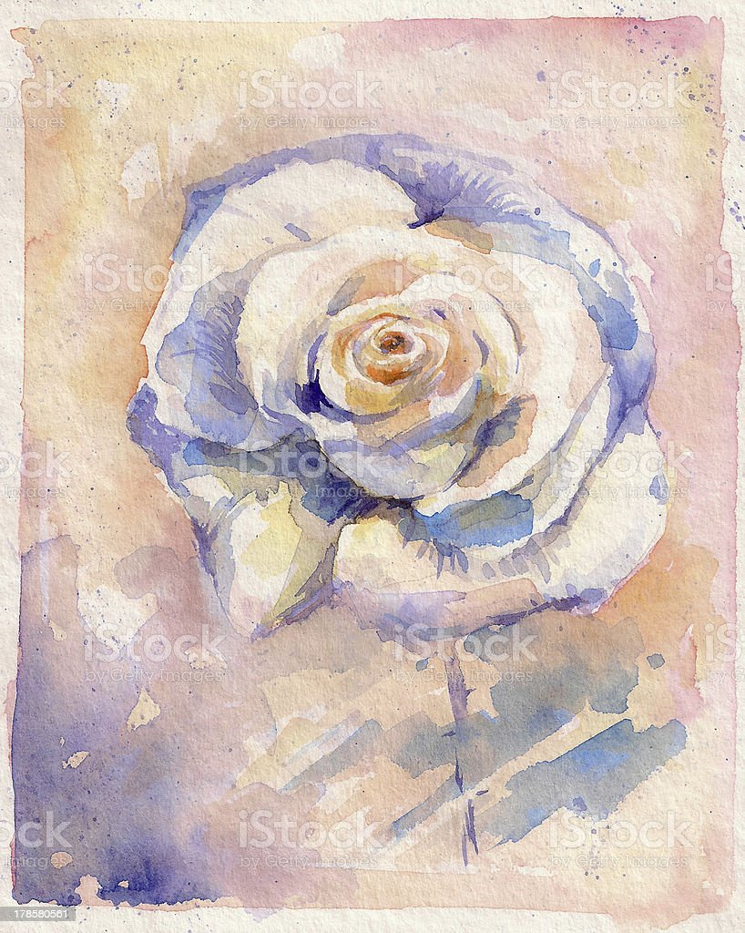 White rose royalty-free stock vector art