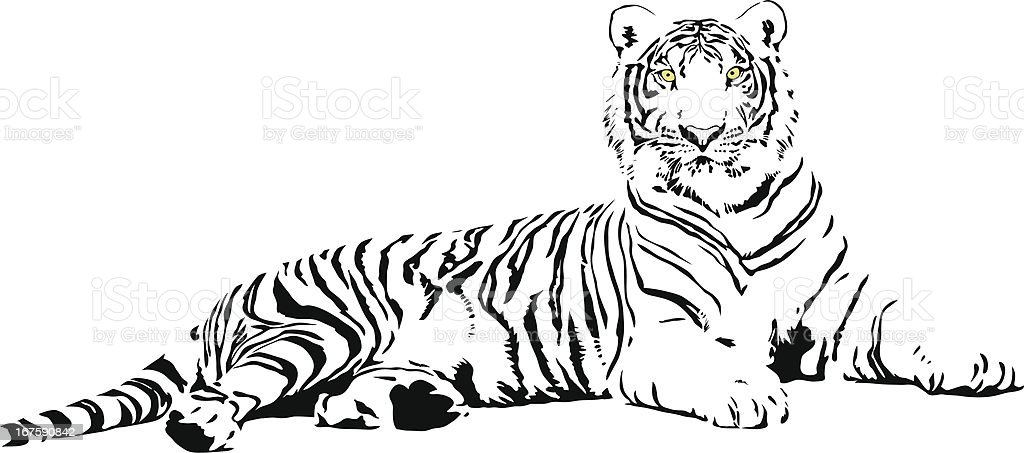 White Tiger vector art illustration