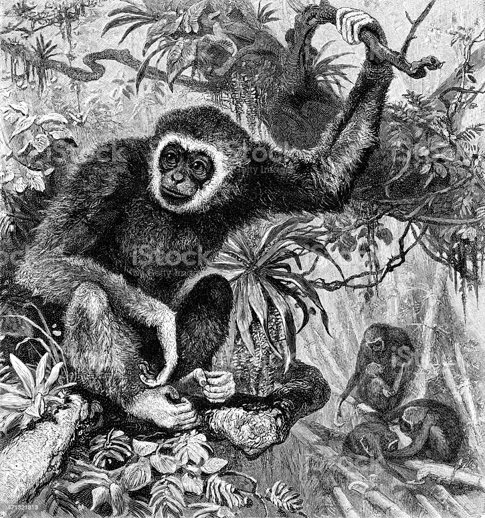 white-handed gibbon vector art illustration