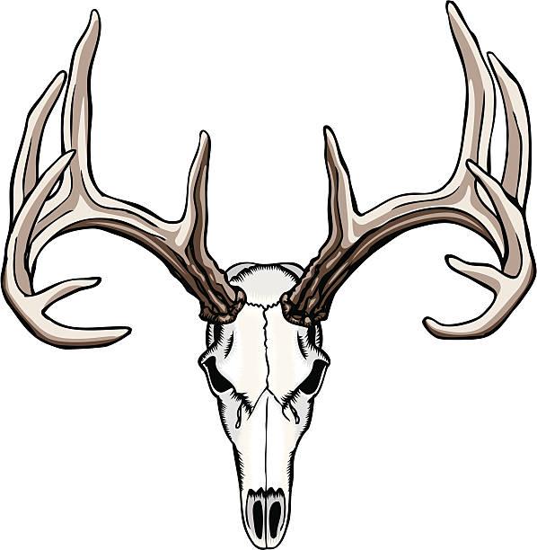 Deer Antlers Clip Art, Vector Images & Illustrations - iStock