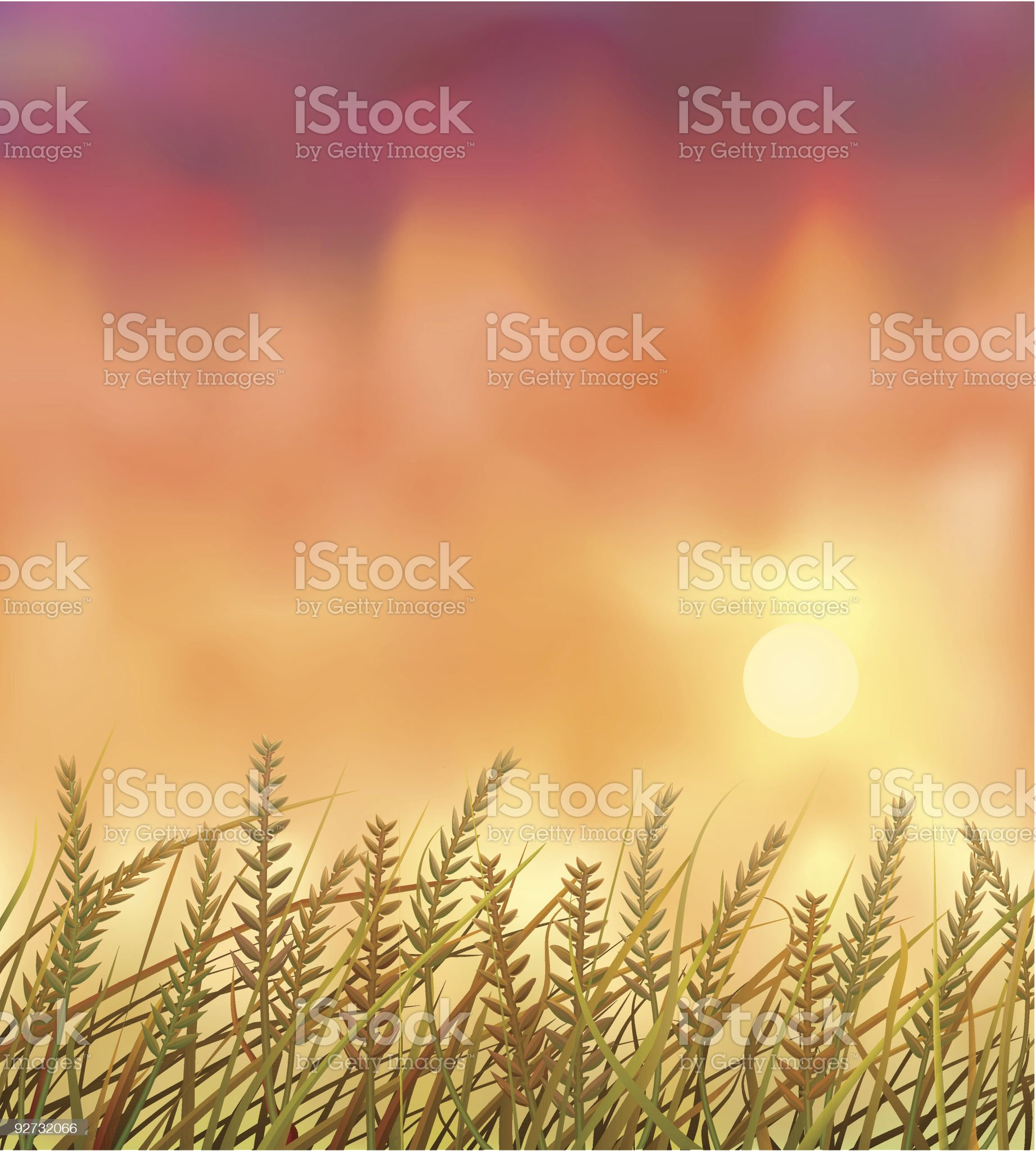 Wild crops field at sunset royalty-free stock vector art