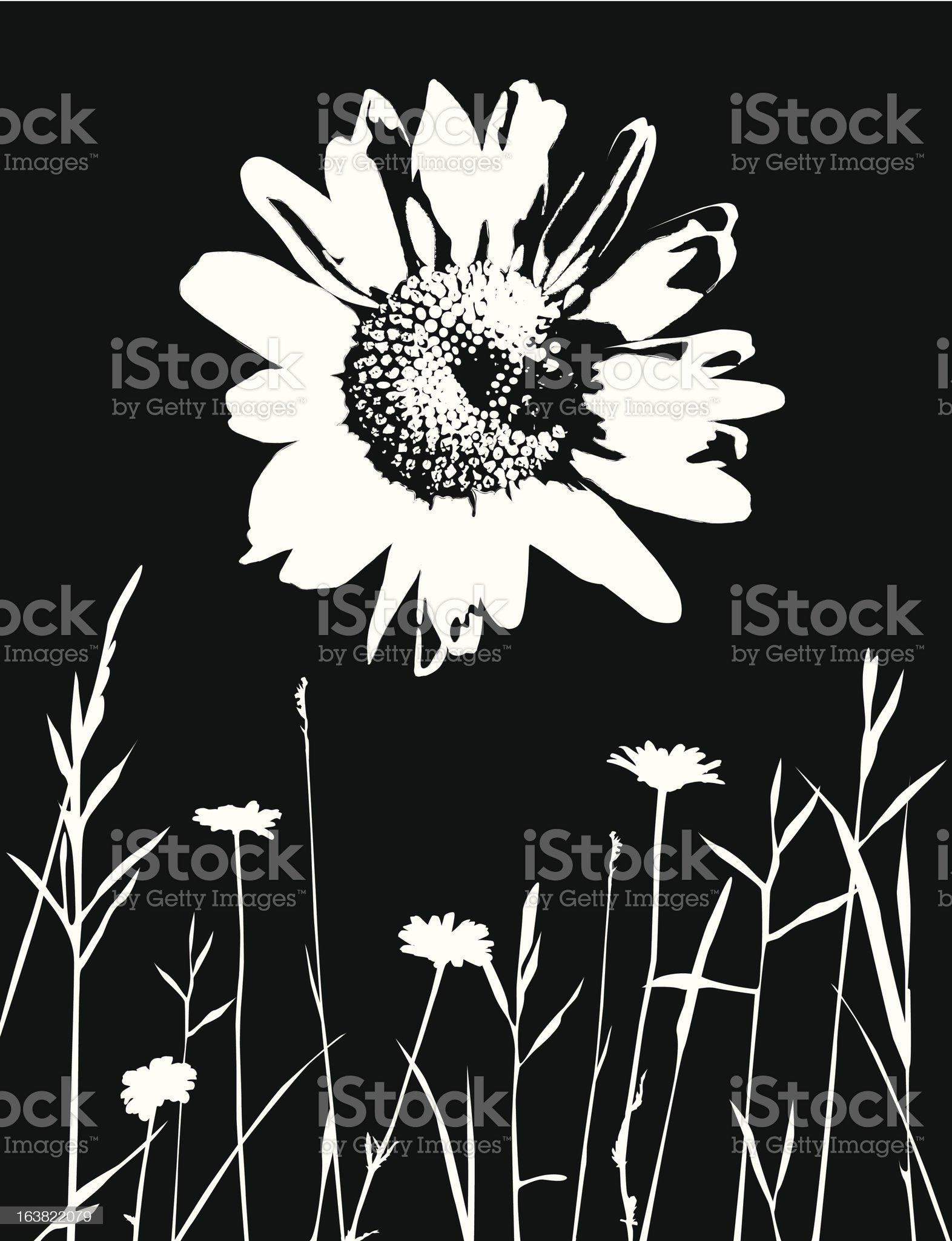 Wild Daisy and Meadow royalty-free stock vector art