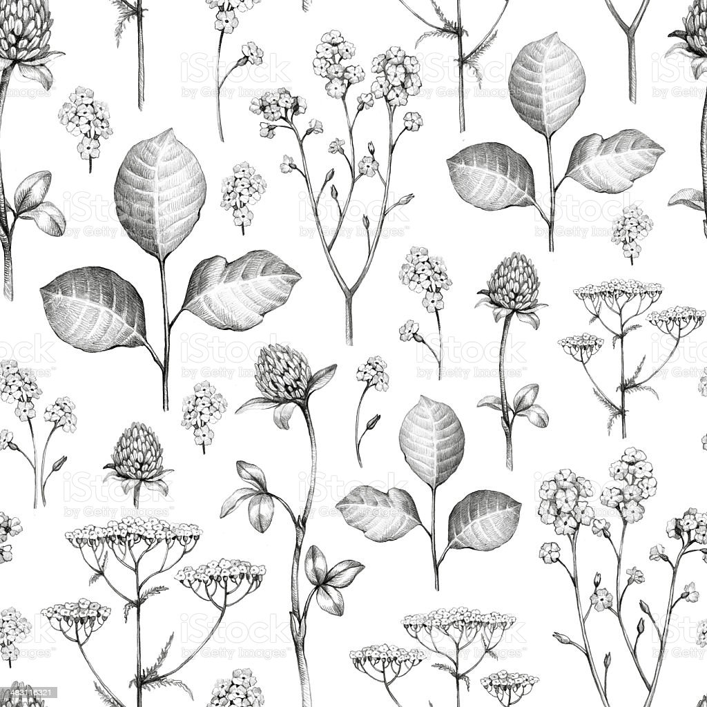 Wild flowers drawing. Seamless pattern vector art illustration
