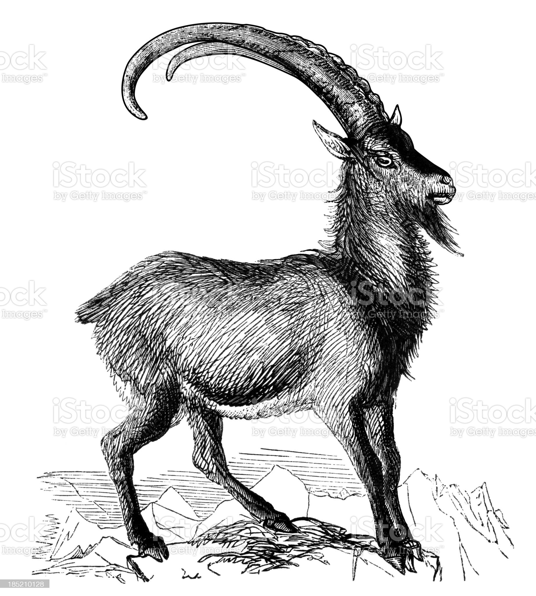 Wild goat royalty-free stock vector art