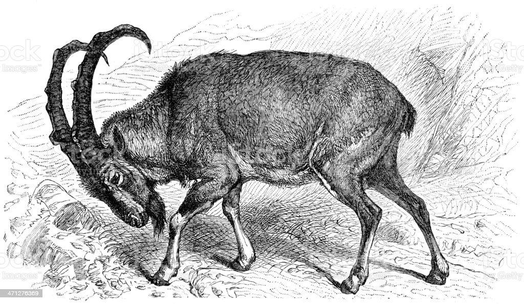 wild goat vector art illustration