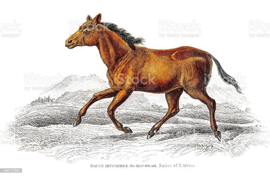 Wild horse 1841 vector art illustration
