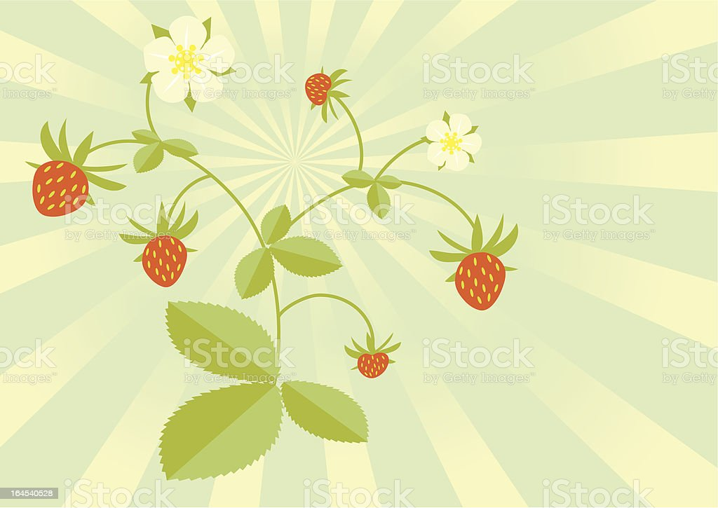 Wild strawberries royalty-free stock vector art