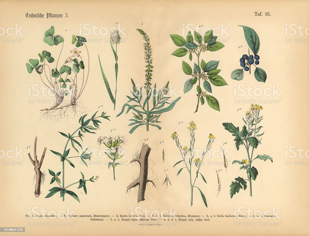 Wildflowers, Annual and Perennial Plants, Victorian Botanical Illustration vector art illustration