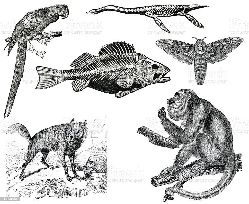 Wildlife vintage collection vector art illustration