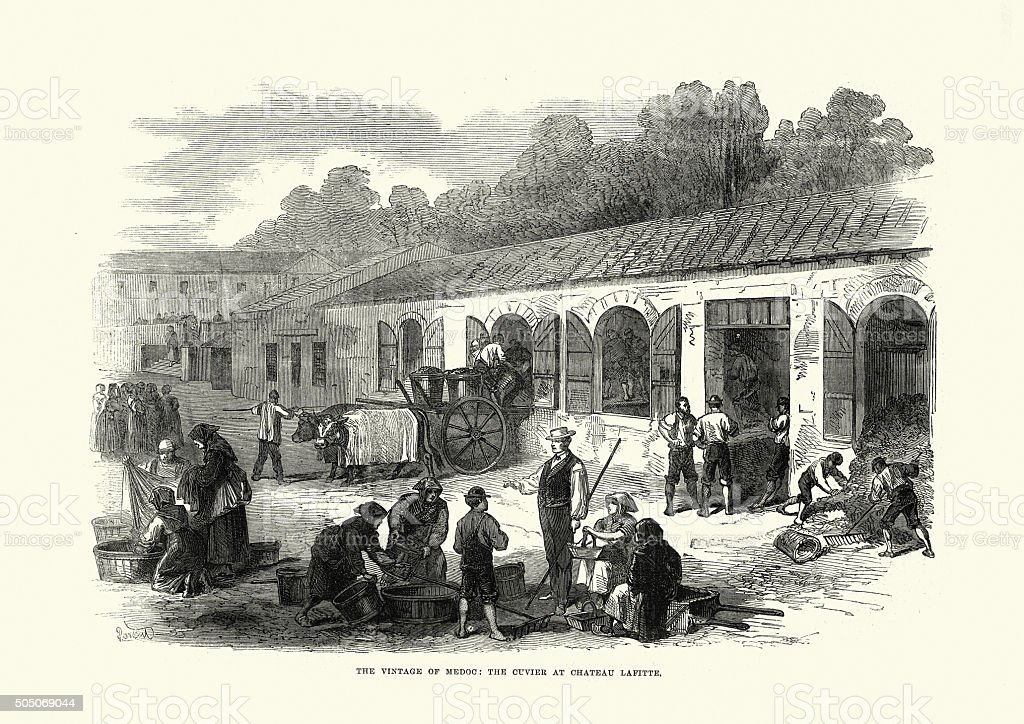 Wine making in Medoc Cuvier at Chateau Lafite vector art illustration