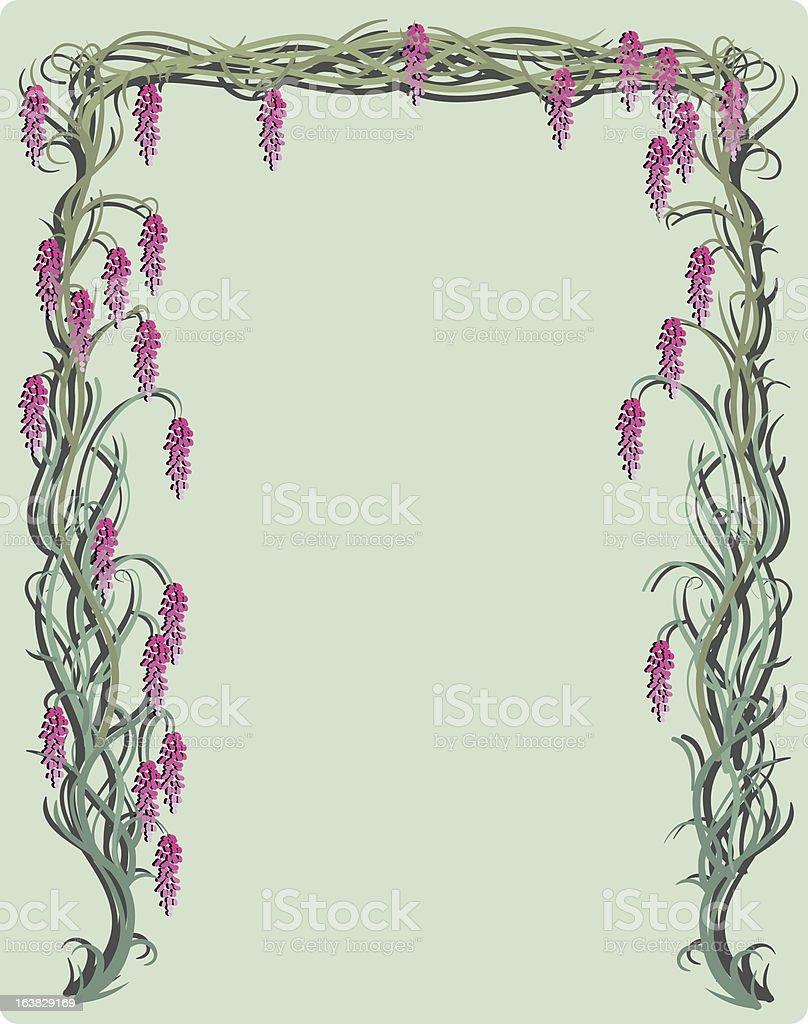 wisteria vine royalty-free stock vector art