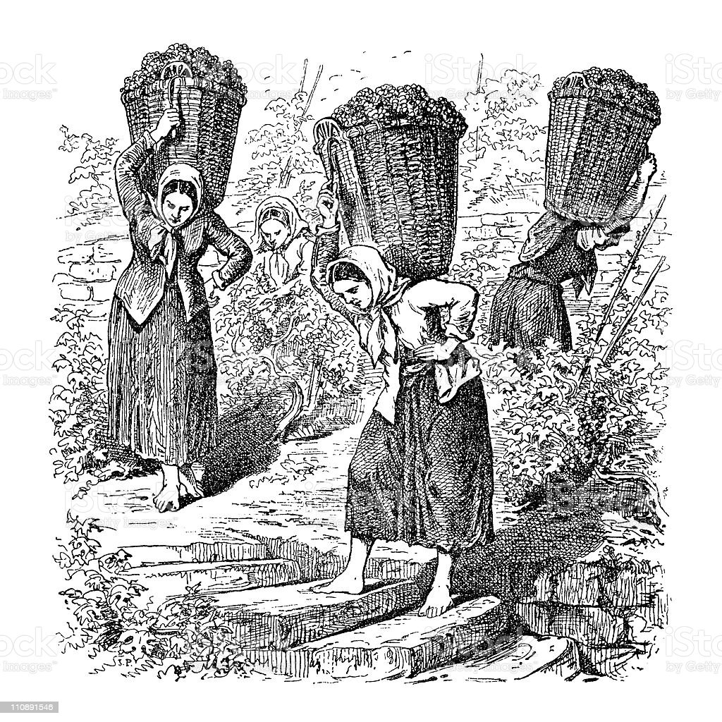 Women Carrying Grapes in Victorian Europe vector art illustration
