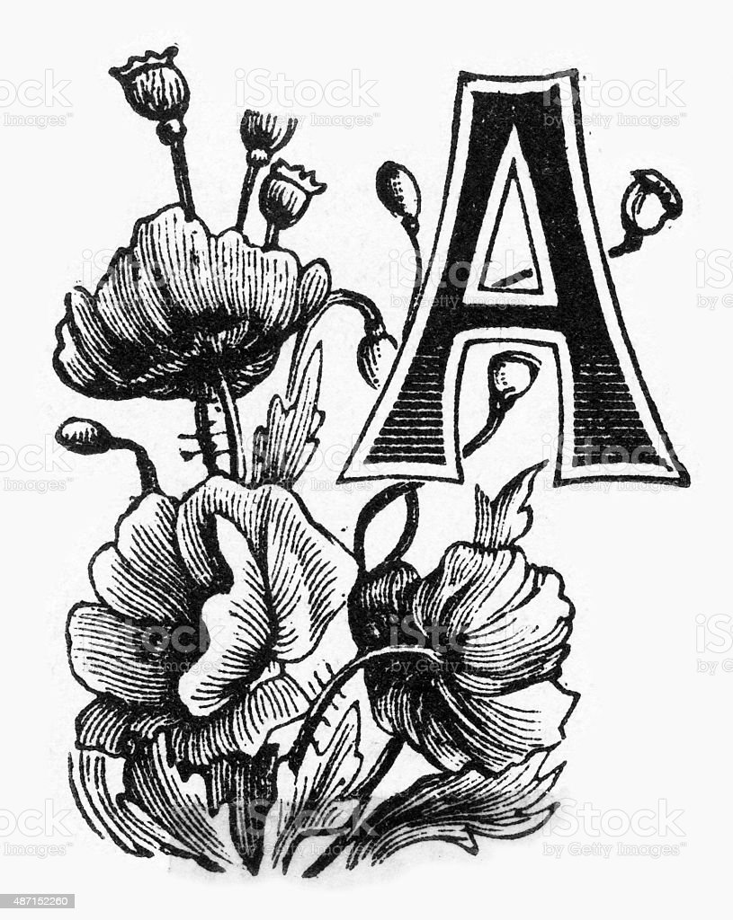 "Woodcut of a Capital ""A"" with Delphinium Victorian Engraving stock photo"