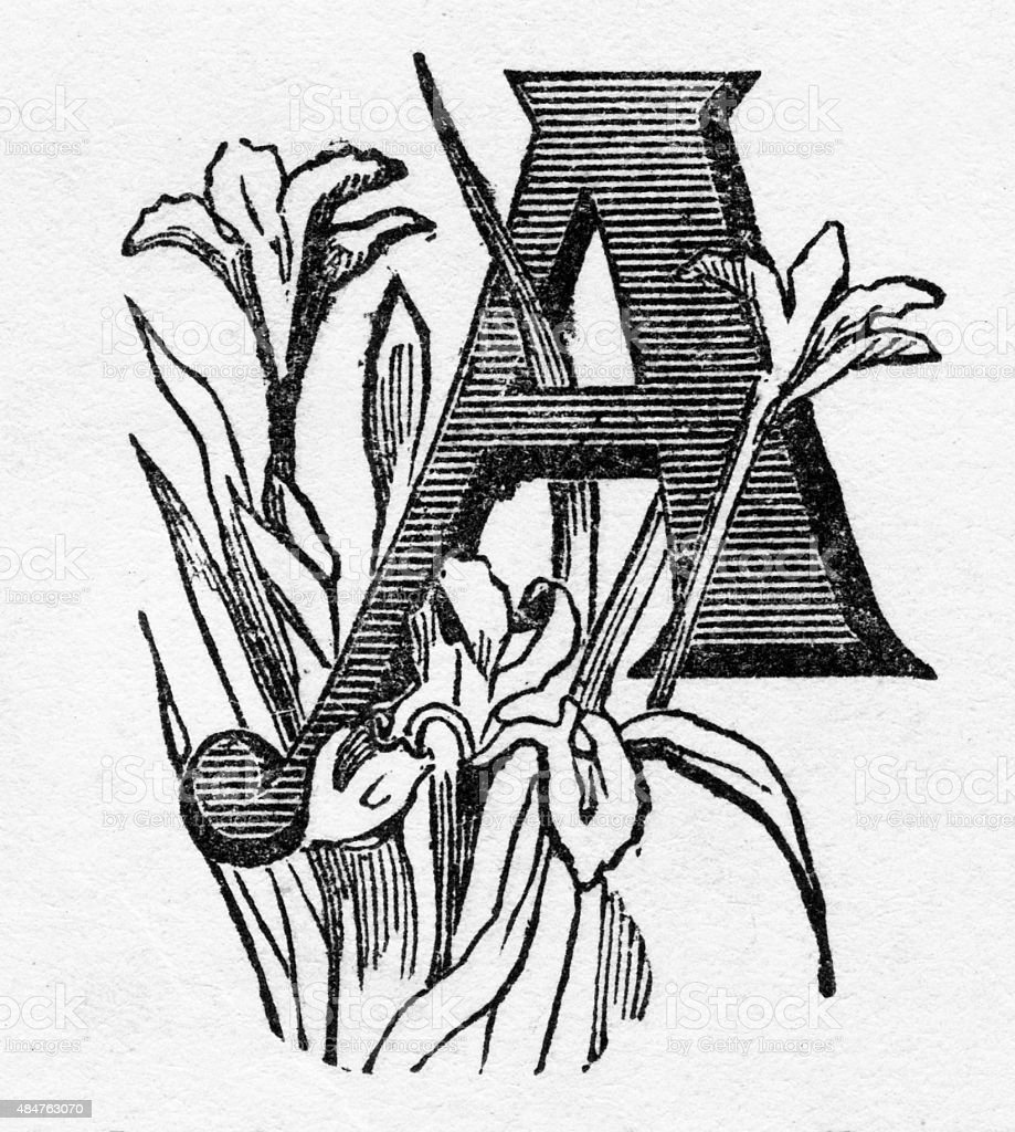 """Woodcut of a Capital """"A"""" with Iris Victorian Engraving stock photo"""