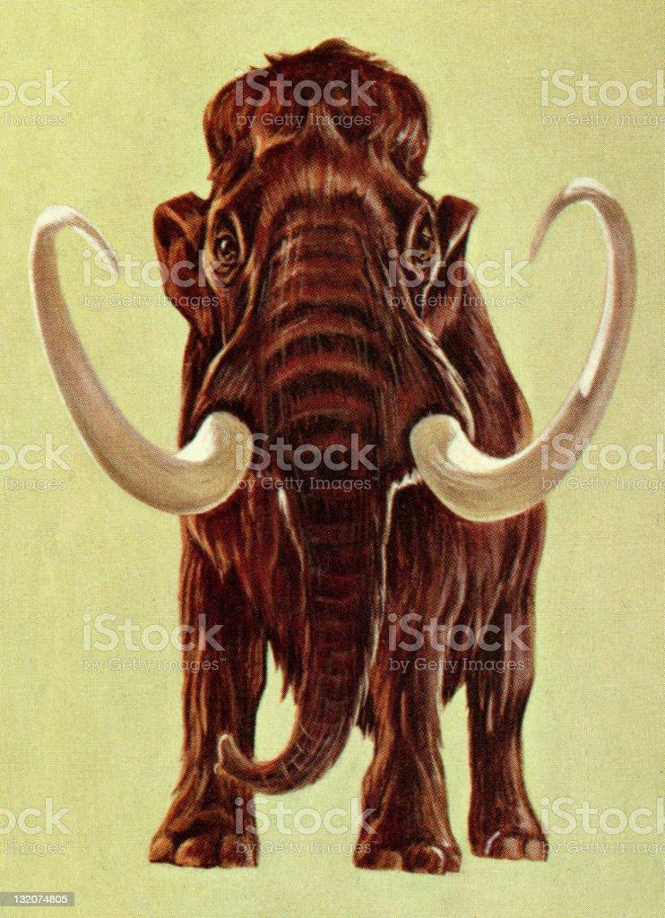 Woolly Mammoth royalty-free stock vector art