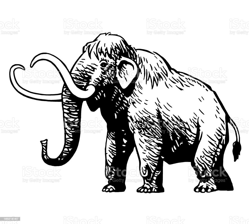 Wooly Mammoth royalty-free stock vector art