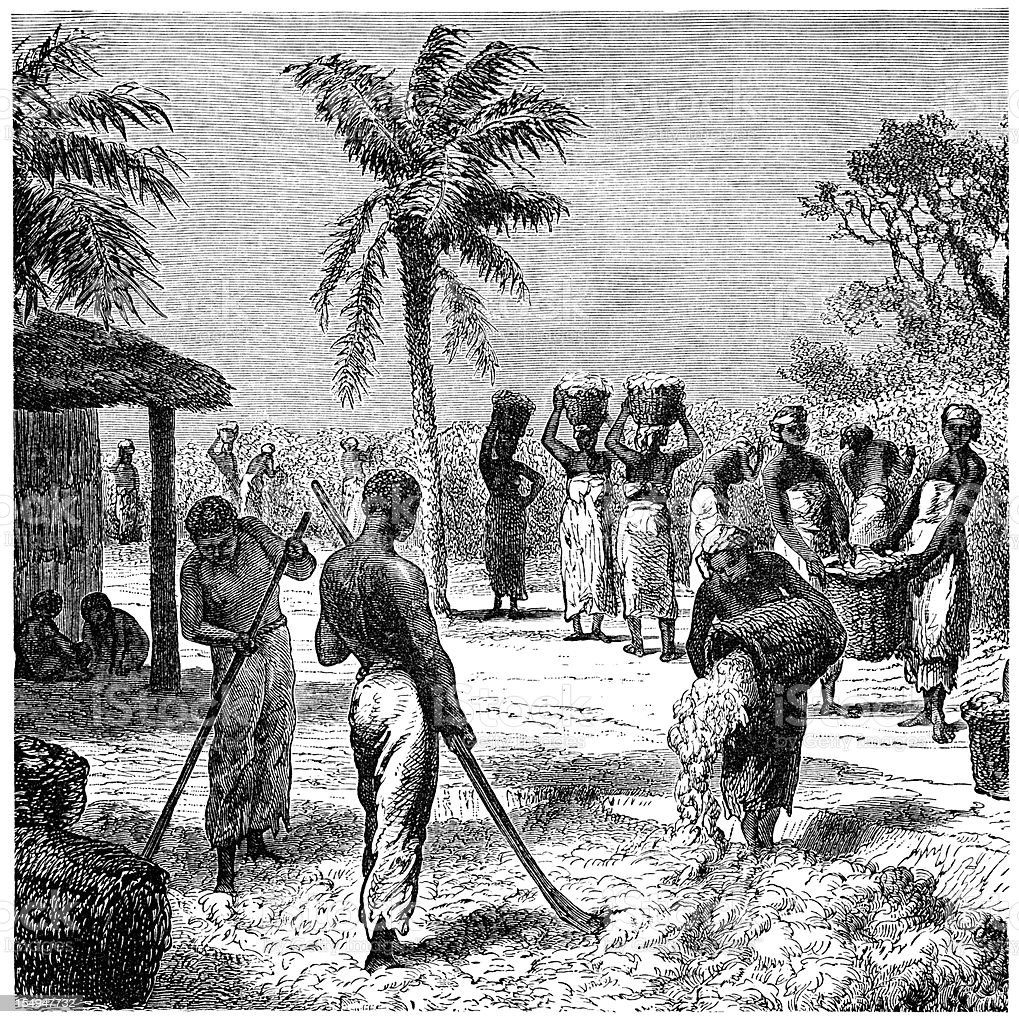 Workers harvesting cotton in Florida (1882 engraving) royalty-free stock vector art